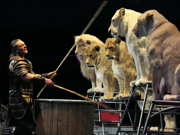 lion6檻なし