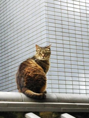 早稲田散歩6月_180621_0011