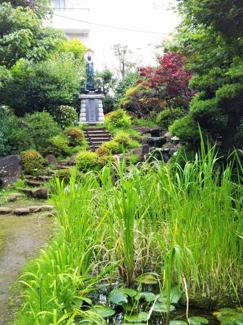 早稲田散歩6月_180621_0015