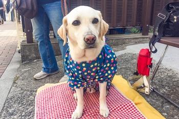 20170527_盲導犬のアイク君(6歳)